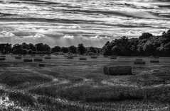 After the Harvest (nigdawphotography) Tags: bales hay haybales field farm arable harvest summer season crop essex widford