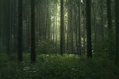 Deep and green (Petr Skora) Tags: les mood smrk strom forest woods trees nature green light foliage deep