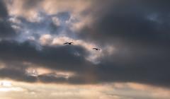_DO14876 (Edoardo Marino) Tags: palos pv palosverdes san pedro california sunset park ocean sun light outdoor shoot people silhouette tamron tamron85 85mm nikon nikkor 20mm wideangle lightroom edoardomarino marinoedoardo dodi d810 birds sky clouds beauty colors