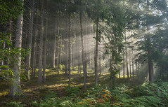 Mystic forest (Guido de Kleijn) Tags: mist forest guidodekleijn nikond500 nikkor1224 blackforest schwarzwald schwarzenbergimmurgtal morninglight morning