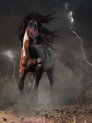Mustang Horse in a Storm (deskridge) Tags: horse westernhorse mustang pinto horsethemed storm thunder lightning gallop equine equestrian western americanwest wildwest wildhorse stormy danieleskridge eskridge remington russell catlin bierstadt moran