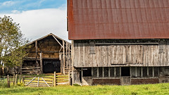 Two Old And Rustic Working Barns (myoldpostcards) Tags: rural country landscape trees fields farm farming weathered barn barns farmbuilding outbuilding pec road rd sangamoncounty centralillinois illinois il unitedstates myoldpostcards vonliski season fall autumn twooldandrusticworkingbarns