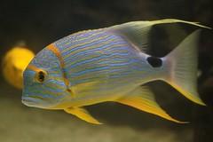Wilhelma-Fisch Foto & Bild | Natur, Zoo: Fische, Zoo, Wildpark ...
