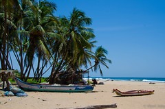 Tropical.jpg (Viren Joky) Tags: pudukuppam puducherry india in
