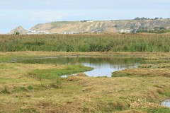 Les Mielles Nature Reserve (andyt1701) Tags: jersey
