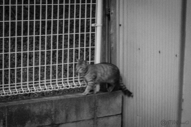 Today's Cat@2013-01-10