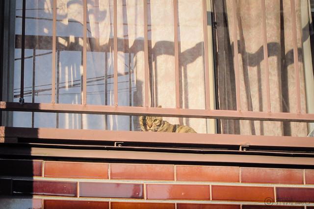 Today's Cat@2013-01-11
