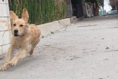 Wrigley (mockstar) Tags: dogs puppy losangeles davidpoe desanimaux goldenretreiever