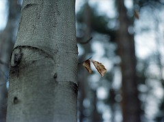 (greenxrage) Tags: tree 120 leaves forest mediumformat kodak bokeh 400 portra mamiyam645 80mmf19