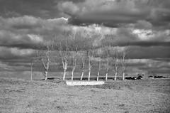 On a line (Tinina67) Tags: road trees bw way strasse wolken line tina sw ziel leading baum weg allee tinina67