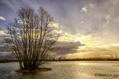 inondations sur le Ried 3 (Patrick d'Alsace) Tags: patrick alsace paysages ried inondations zaugg patrickzaugg