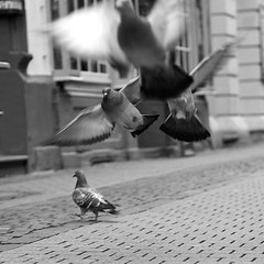 pigeons (wianphoto) Tags: street blackandwhite white black birds shop pen streetphotography olympus 45mm pl5 flyingpigeons streetphotografie blackwhitephotos olympusm45mmf18 olympuspenpl5 lookatthepigeons