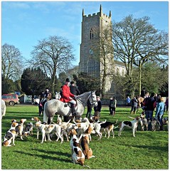 West Norfolk Foxhounds at Great Massingham (Janna...) Tags: horse dogs canine pony stmaryschurch equine villagegreen greatmassingham westnorfolkfoxhounds