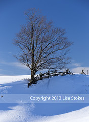 2013:365:040 (Lisa-S) Tags: blue winter shadow snow ontario canada tree field rural fence lisas country rosemont lone 365 day40 pending 2990 day40365 09feb13 09mar13 201302 3652013 gettyimagescanada 365the2013edition winterstormnemo