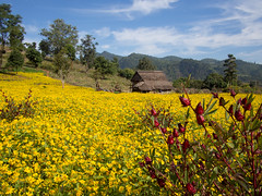 Red and Yellow (Magic Pea) Tags: red sky nature field yellow clouds landscape photography photo burma hut myanmar yellowfield hsipaw thibaw magicpea