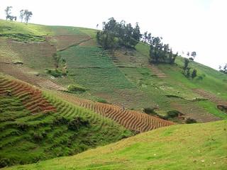 Mountainside Agriculture - Haiti