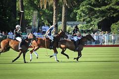 Final: Ellerstina - La Dolfina (mattiasmg) Tags: horse argentina sport caballo deporte match abierto palermo polo partido ellerstina dolfina