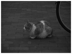 Wheel (Delytayan Third) Tags: bw monochrome japan cat