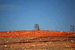 beauty and the landfill.jpg (dawn musick) Tags: elementsorganizer