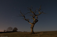 The Tree At Night (.Brian Kerr Photography.) Tags: light sky tree stars landscape cumbria orion moonlight jupiter ledlenser