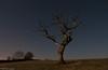 The Tree At Night (.Brian Kerr Photography.) Tags: light sky tree stars landscape cumbria orion moonlight jupiter ledlenser