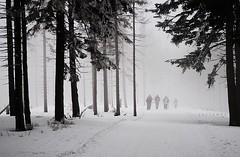 approaching (jarrowka ( )) Tags: las winter mist snow fog forest zima śnieg mgła bielskobiała szyndzielnia klimczok jarrowka favescontestfavoriteson favescontesttopseed favescontestfavored