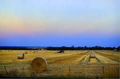 Lots of hay... ( Indigo Skies Photography ) Tags: lighting camera light sky colour digital rural fence lens photography aperture exposure flickr farm country straw iso colourful hay paddock nikond7000 raychristy