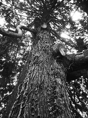 DSCF4230cc (Paigemiddphoto) Tags: wood trees light england sky blackandwhite bw plants white black tree love nature up field vertical contrast forest dark landscape geotagged photography weird photo moss woods dof close darkness natural bright zoom wildlife perspective ivy devon fields kingsbridge favourite geotag
