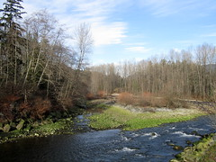 Seymour river view from Dollarton Highway (chaerea) Tags: trees tree nature vancouver forest moss bc