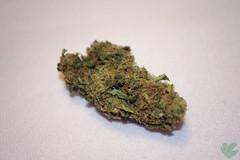 DoF (GanjaGrouch) Tags: weed 420 pot thc marijuana cannabis sativa stoner ganja mmj medicalmarijuana kush nug