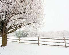 Goddess (Many Muses) Tags: snow tree home landscape spring blossoms myfrontyard lindaplaistedcom