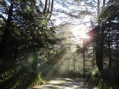bright sunshine (oneroadlucky) Tags: sunlight mist mountain plant tree nature fog forest sunrise landscape path