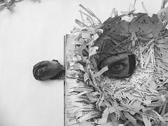 being inside and outside the story (Ines Seidel) Tags: book alteredbook text strips story storytelling inside outside eye seeing identity buch zerschnitten vessel held bowl gefs schale gehalten geschichte augen streifen identitt