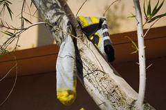 Must...Reach...Batsock... (bosko's toybox) Tags: batman socks weird