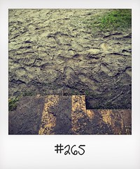 """#DailyPolaroid of 19-6-16 #265 • <a style=""""font-size:0.8em;"""" href=""""http://www.flickr.com/photos/47939785@N05/28317952894/"""" target=""""_blank"""">View on Flickr</a>"""