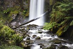 Hopetoun Falls, Otway National Park (Liz McMahon) Tags: waterfalls hopetounfalls greatoceanroad otwaynationalpark winterinaustralia nikond750 nikon70200mm rainforest re
