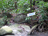 Natural Jacuzzi this way (little_duckie) Tags: minca bonda colombia southamerica finca cacao waterfall cascada jungle
