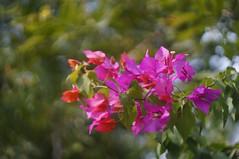 Swirls of color (hasham2) Tags: swirly bokeh flowers background