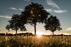 Light of Summer (flamelab.de) Tags: clouds fields grass light ostfildern sky stuttgart summer sunset tree landscape scenery