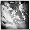 (disneyred) Tags: california southerncalifornia disney disneyland anaheim outdoor blackandwhite jingles bells flowers horse carousel carouselhorse kingarthurcarousel