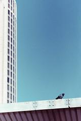 Untitled (Pazmino Photography) Tags: cinestill 800t nikon fm3a 50mmf12 pakon scan