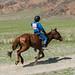 Cavalos esbeltos