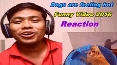 ###Dogs are feeling hot || Funny Video 2016 -Reaction (sarker175) Tags: dogs feeling hot || funny video 2016 reaction