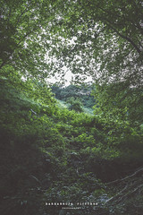 +The forest is watching you+ (Barbarroja Pictures) Tags: eye trees leaves forest mountain top green colors cold wet sky lights shadows beauty mystic witchcraft sunset landscape old nature wild walk spirit
