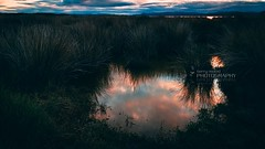 raccoon lagoon (terry wood Photography) Tags: terrywoodphotography canon 7d 1022 pool amburypark reflection sunset days end racoon face