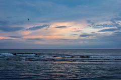 Baltic Sea (`TOMS`) Tags: liepaja latvia baltic sea water blue bird seagull sunset clouds cloud outdoor shore horizont sky nikon d3200 nikkor 35mm f18 afsdxnikkor35mmf18g landscape seaside coast ngc