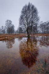 Strabrechtse Heide 317 (Deshamer) Tags: 2016 forest heathland nl netherlands strabrechtseheide sunrise water winter heeze noordbrabant