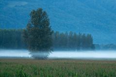 Brume d'Isère à 7 heures (Pierrotg2g) Tags: paysage landscape nature isère dauphiné grésivaudan nikon d90 tamron 70200