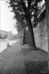 Paris foma 100 09-2016 24 (yves thom) Tags: fomapan100 olympusxa3 paris quaideseine