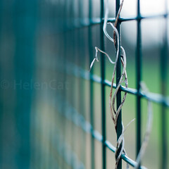 Something Green 005-365 2013 (~Helen Cat) Tags: green fence dead bokeh day5 bind 365project 005365 odc2 0053652013
